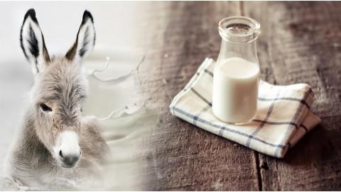 Что вы знаете о пользе молока ослиц?